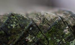 Grano cubierto de musgo 1 del extremo fotos de archivo libres de regalías