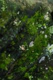 Grano cubierto de musgo 2 del extremo fotos de archivo libres de regalías
