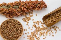 Grano in cucchiaio, sorgo coltivato del ramo e grano saraceno di legno su backg bianco Fotografia Stock
