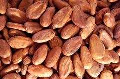 Grano de cacao Imágenes de archivo libres de regalías