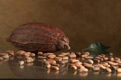 Grano de cacao Fotografía de archivo