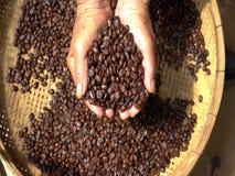 Grano de café del Arabica en mano del granjero metrajes