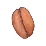 Grano de café ejemplo del bosquejo de la acuarela aislado en b blanco Fotos de archivo