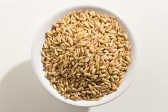 Grano de cereal de la avena Vista superior de granos en un cuenco Fondo blanco fotografía de archivo libre de regalías