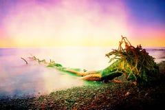 Grano de la película Cielo rosado sobre nivel del agua ahumado liso Árbol caido solo en la costa costa pedregosa vacía Árbol de l Fotografía de archivo