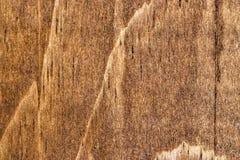 Grano de madera 1 Imagen de archivo libre de regalías