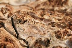 Grano de madera del Burl imagen de archivo libre de regalías