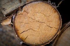 Grano de madera del registro Foto de archivo libre de regalías