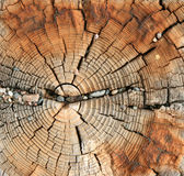 Grano de madera resistido Foto de archivo
