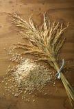 Grano del arroz Fotos de archivo