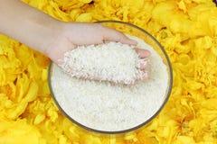 Grano del arroz en manos Imagen de archivo