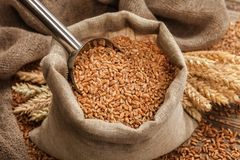 Grano del grano in borse ed orecchie del grano sulla tavola Immagine Stock
