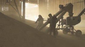Grano del cargamento con la ayuda del transportador del raspador y de dos trabajadores almacen de metraje de vídeo