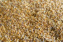 Grano del maíz Imágenes de archivo libres de regalías