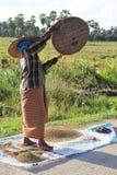 Grano del riso di pulizia Immagini Stock