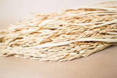Grano del riso o della risaia (oryza) su fondo marrone Fotografie Stock