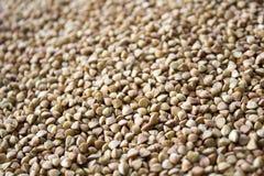 Grano del grano saraceno Immagine Stock Libera da Diritti