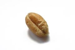 Grano del trigo Imagen de archivo libre de regalías