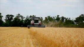 Grano del trigo en un funcionamiento de la máquina segadora y del tTactor de la maquinaria agrícola del fondo en el campo, cámara almacen de video