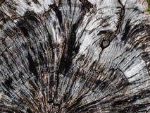 Grano dell'albero Fotografie Stock