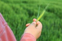 Grano della tenuta dell'agricoltore in sua mano fotografia stock libera da diritti