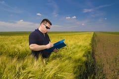 Grano di Inspecting dell'agricoltore sul campo Fotografie Stock Libere da Diritti