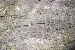 Grano di legno Fotografie Stock Libere da Diritti