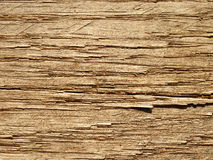 Grano di legno di quercia Immagini Stock Libere da Diritti