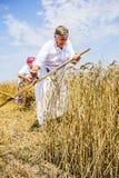 Grano di taglio dell'agricoltore Immagine Stock