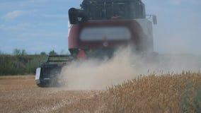 Grano di taglio della mietitrebbiatrice video di movimento lento concetto del raccolto di agricoltura Mietitrebbiatura nello stil archivi video