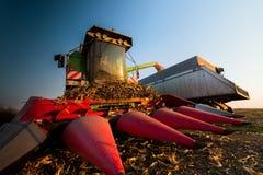 Grano di versamento del cereale nel rimorchio di trattore Immagine Stock Libera da Diritti