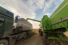 Grano di versamento del cereale nel rimorchio di trattore Immagini Stock