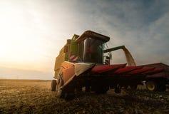 Grano di versamento del cereale nel rimorchio di trattore Fotografie Stock Libere da Diritti