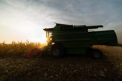Grano di versamento del cereale nel rimorchio di trattore Fotografie Stock