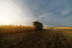 Grano di versamento del cereale nel rimorchio di trattore Fotografia Stock