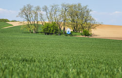Grano e cappella verdi Fotografia Stock Libera da Diritti