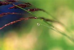 Grano en la hierba 1 Fotos de archivo libres de regalías