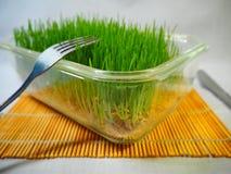 Grano germogliato verde fresco e grano GER Fotografie Stock Libere da Diritti