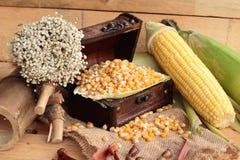 Grano giallo del cereale e cereale asciutti freschi Fotografia Stock
