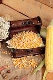 Grano giallo del cereale e cereale asciutti freschi Immagini Stock Libere da Diritti