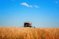 Grano maturo di raccolto meccanico di agricoltura della mietitrebbiatrice nel campo dell'azienda agricola Fotografie Stock Libere da Diritti