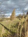 Grano nel vento un giorno nuvoloso fotografie stock