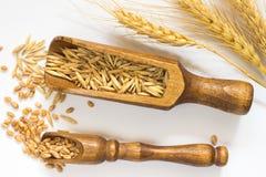 Grano in piccolo cucchiaio di legno Avena in un grande cucchiaio di legno Fotografie Stock Libere da Diritti