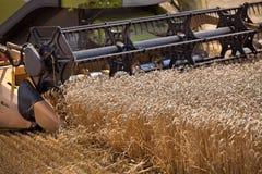 Grano que cosecha la cosechadora Fotografía de archivo libre de regalías
