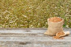 Grano saraceno con il fondo del giacimento del grano saraceno Immagini Stock