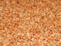 Grano saraceno del fondo, grano saraceno, grano del grano saraceno Immagini Stock Libere da Diritti