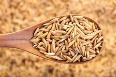 Grano sin moler del arroz en una cuchara de madera y la formación de un fondo fotografía de archivo