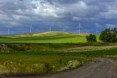 Grano, vento e Wildflowers Fotografia Stock Libera da Diritti