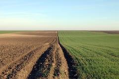Grano verde e paesaggio arato di agricoltura del campo Immagini Stock