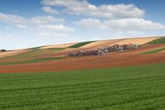 Grano verde e terreno coltivabile arato dei campi Immagini Stock